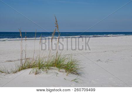 Ocean Beach Scene With Sea Grass On Seashore Sand.  Beautiful Natural Outdoor Scenic Tourist Destina
