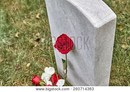 A Blank Headstone In A Cemetery With Rose And Rose Petals Around The Headstone And Shallow Depth Of