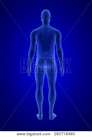 Blue Human Anatomy Body 3d Scan Render On Blue Background - Back View