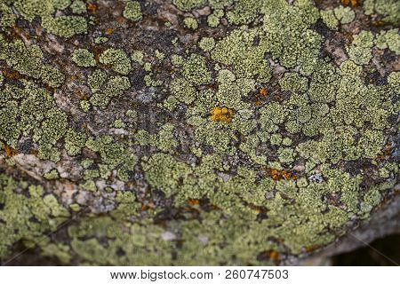 Moss Texture And Background. Green Moss On Stone Background. Organic Texture And Background For Desi