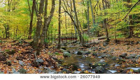 Autumn forest with wood bridge panorama over creek in yellow maple forest with trees and colorful foliage.