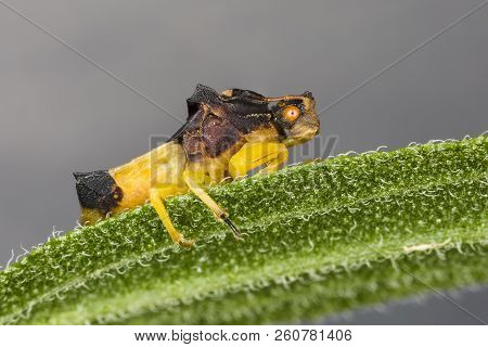 Jagged Ambush Bug (Phymata sp) perched on a leaf - Ontario, Canada poster