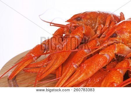 Boiled crayfish on a plate. Red crustaceans with large claws, on a white background poster