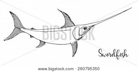 Hand Drawn Swordfish. Vector Illustration In Sketch Style