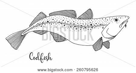 Hand Drawn Codfish. Vector Illustration In Sketch Style