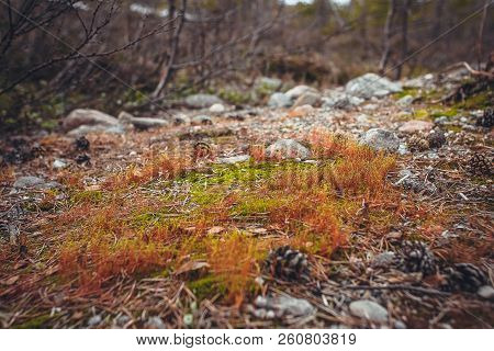 Sunlight From The Top In Forest. Autumnal Wood. Red Autumn Leaves Fallen In Forest. Colorful And Fog