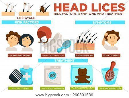 Head Lice Risk Factors Symptoms And Treatment Poster Vector