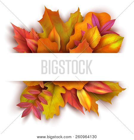 Autumn Background With Forest Fall Leaves. October Holiday Nature Vector Banner Design. Illustration