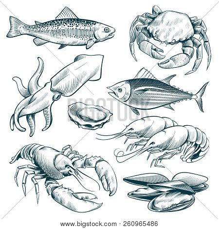 Sketch Seafood. Lobster Shellfish Fish Shrimp. Hand Drawn Seafoods Meal Vintage Vector Set Isolated.