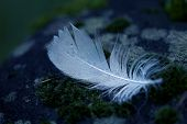 Detail of bird feather on the rock in blue tone poster