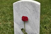 A blank headstone in a cemetery with roseand shallow depth of field poster