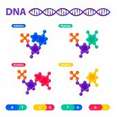 DNA structure, genome sequencing concept. Nanotechnology and biochemistry laboratory. Molecule helix of dna, genome or gene structure. Human genome project. Flat style vector illustration poster