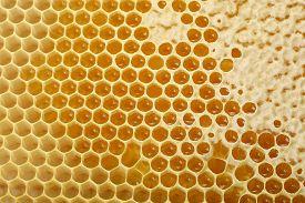 Yellow Wax Honeycomb With Honey. Closeup, Background, Texture