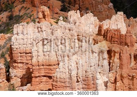 Hoodoo Rock Formations In Bryce Canyon National Park.  Sun On White And Red Rock.  Pine Trees In Bac
