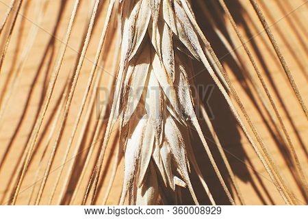 Rye Spike Closeup. Rye Spike Background. Rye Ears Macro