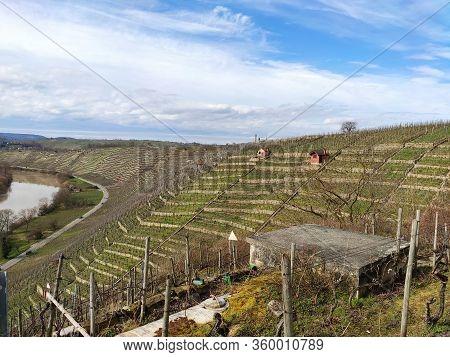 Vineyard, Terraced Hills Near River Neckar