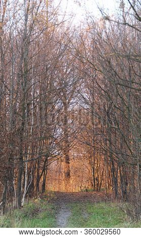 Path Leading Through The Forest And Enlightened Tree At The End Of It In Autumn In The Evening