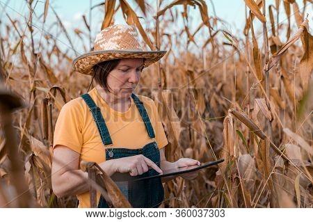 Female Corn Farmer Using Digital Tablet In Cornfield, Smart Farming Concept With Woman Farm Worker W