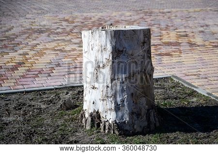 White Stump From A Sawn Tree In A City Park