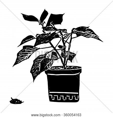 Black Outline Hand Drawing Vector Illustration Of A Decorative Plant Poinsettia In A Pot Isolated On