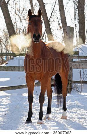 Horses in snow farm