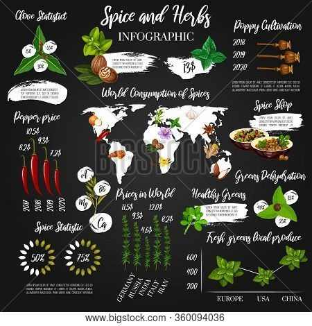 Cooking And Seasoning Herbs Vector Infographics And Statistics. Herbal Flavoring And Food Cooking Di