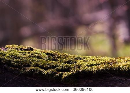 Moss Tree Trunk Top For Your Decoration And Spring Landscape