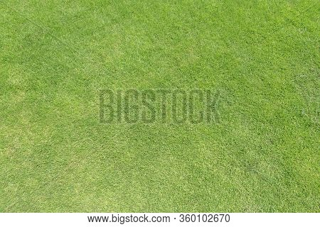 Green Grass Lawn Texture Background From Top View For Golf Course Turf With Grassy Pattern For Envir