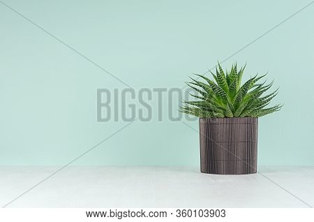 Spring Home Decor With Potted Plant In Trendy Green Mint Menthe Interior  -  Pulpy Bright Green Aloe