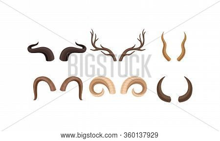 Horns Of Different Animals With Ram And Deer Antlers Vector Set