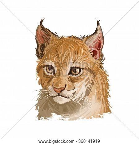 Eurasian Lynx Baby, Medium-sized Wild Cat From Europe, Central Asia. Digital Art Illustration Of Lyn