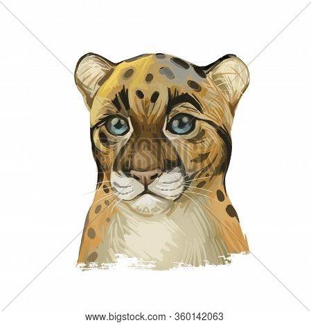 Sunda Clouded Leopard Baby Tabby Watercolor Portrait Closeup. Neofelis Diardi Animal From Feline Mam