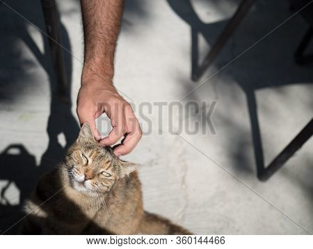 A Happy Cat Purring And Cuddling In Sunlight