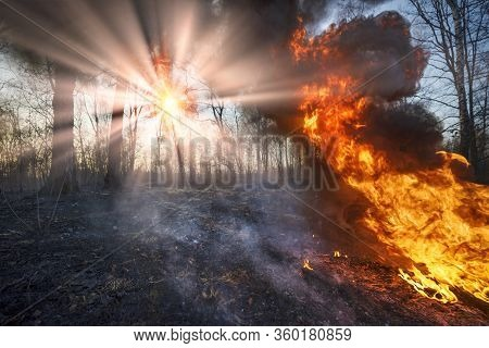 Burning Forests And Fields