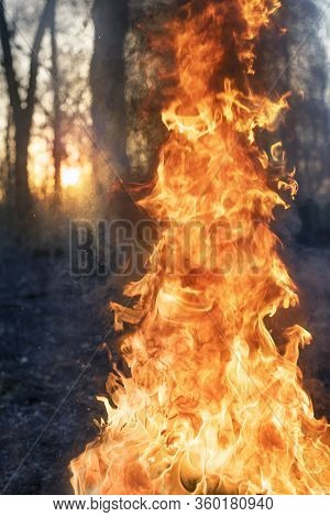 Burning Tree In A Forest Fire