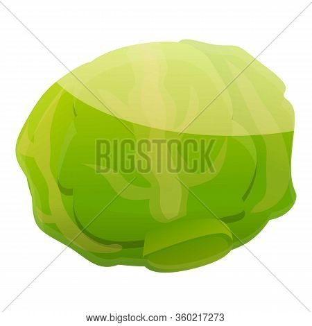 Diet Cabbage Icon. Cartoon Of Diet Cabbage Vector Icon For Web Design Isolated On White Background
