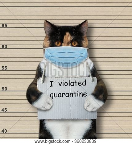 The Multi Colored Cat In A Surgical Protection Face Mask Was Arrested. It Has A Sign Around Its Neck