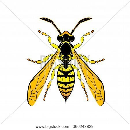 Wasp Line Drawing Cartoon. Yellow Bee Isolated On White Background. Bumblebee Hand Drawn Doodle, Gra