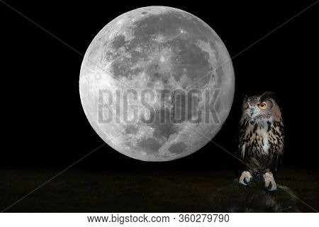 Big Owl Perched On Rock And Super  Full Moon  Background.