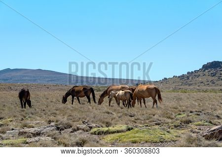 Landscape Pictures With Horses In Patagonia, Argentina