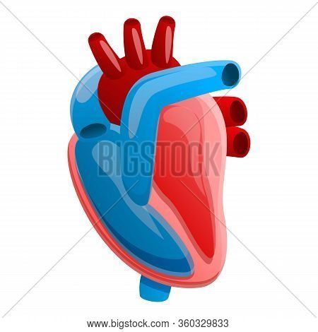 Anatomy Human Heart Icon. Cartoon Of Anatomy Human Heart Vector Icon For Web Design Isolated On Whit