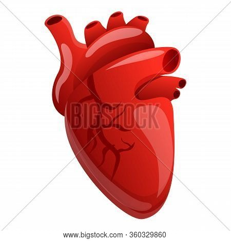 Body Human Heart Icon. Cartoon Of Body Human Heart Vector Icon For Web Design Isolated On White Back