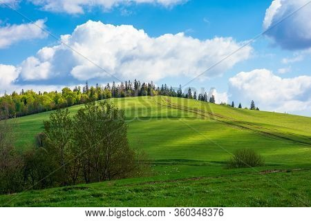 Wonderful Sunny Weather With Clouds Above The Hill. Green Grass On The Meadow In Dappled Ligth, Fore