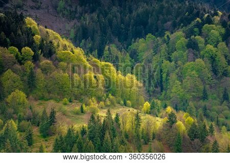 Forest On The Hills In Spring. Beautiful Environment Background In Mountains. Trees In Colorful Lush