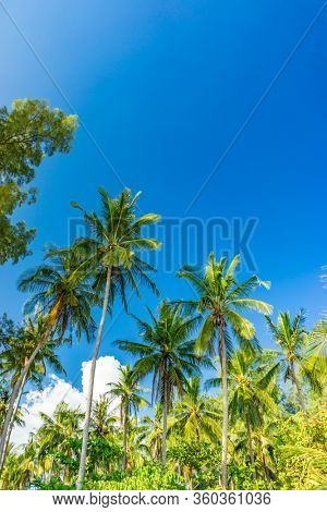 Coconut trees at the tropical beach