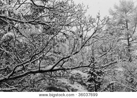Layers of snow covered winter trees with no leaves