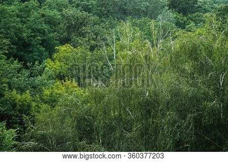 Heavy Pouring Rain Over Green Tropical Forest Trees. Rainstorm Downpour Autumn Weather