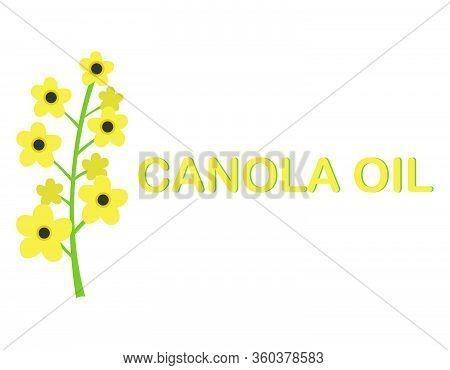 Rape Seeds And Flowers - Rape Oil - Isolated Vector Illustration