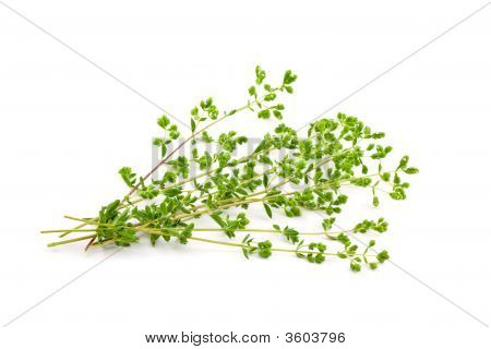 Fresh Oregano
