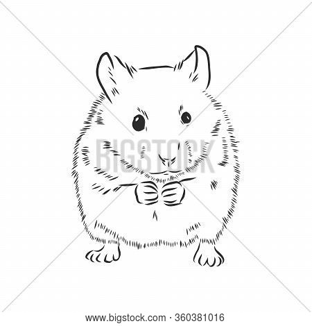 Cute Hamster, Pet, Rodent, Vector Sketch Illustration